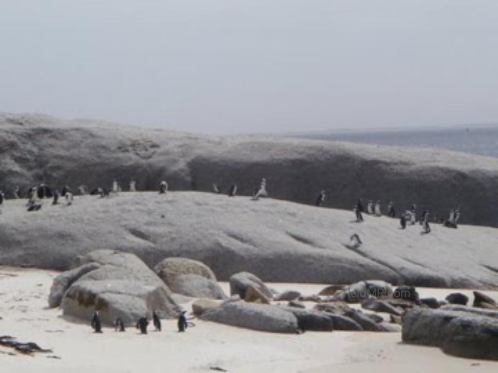 A penguin conservatory on the way to Cape of Good Hope.