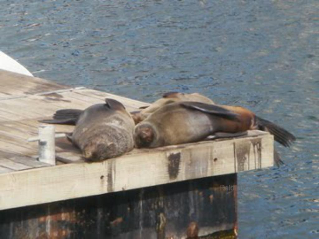 Seals on a dock on the ocean. In Cape Town proper.