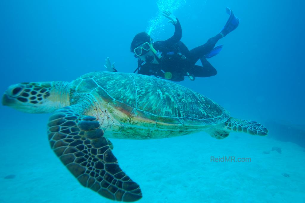 Ben scuba diving right by a sea turtle.