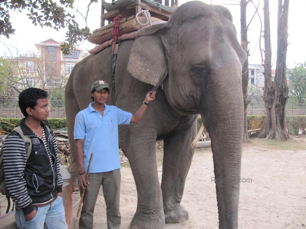 Elephant and its handler