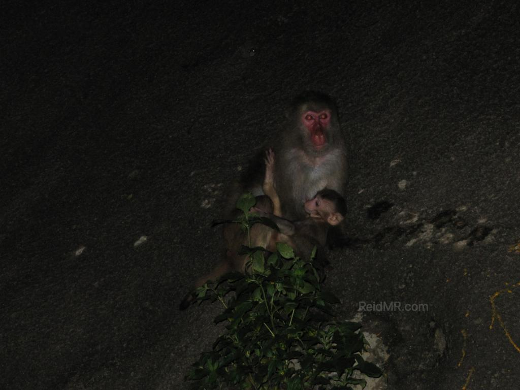 A mother monkey and her baby, it is dark.