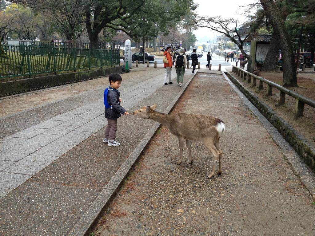 A little boy feeding a deer at Nara Park