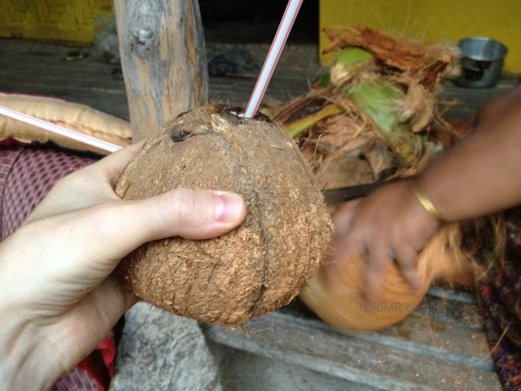 Fresh coconut with an in progress coconut being peeled