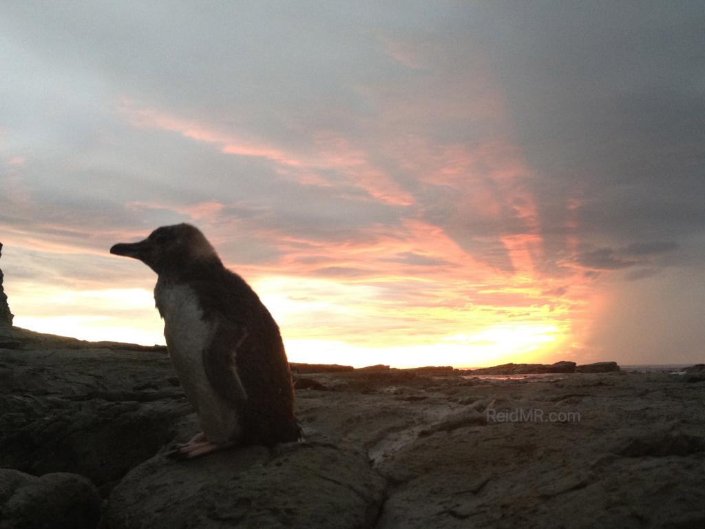 Penguin with a great sunrise in the background.